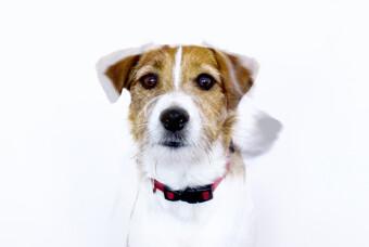 Olivia - Team Builder / Pet Therapist Artebit