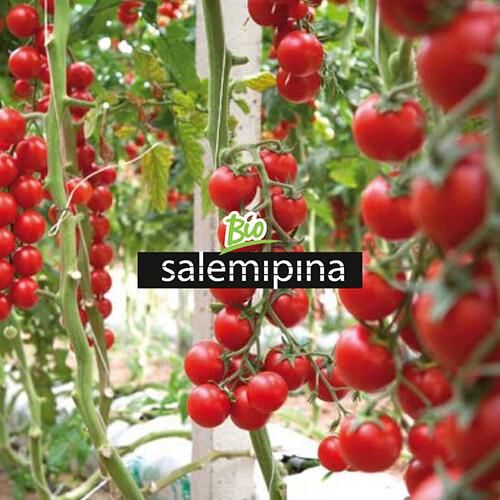 artebit_aziende_bio_salemipina